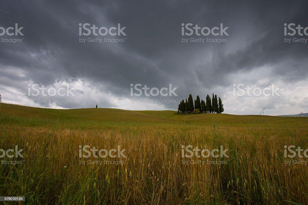 Cipressi di San Quirico d'Orcia stock photo
