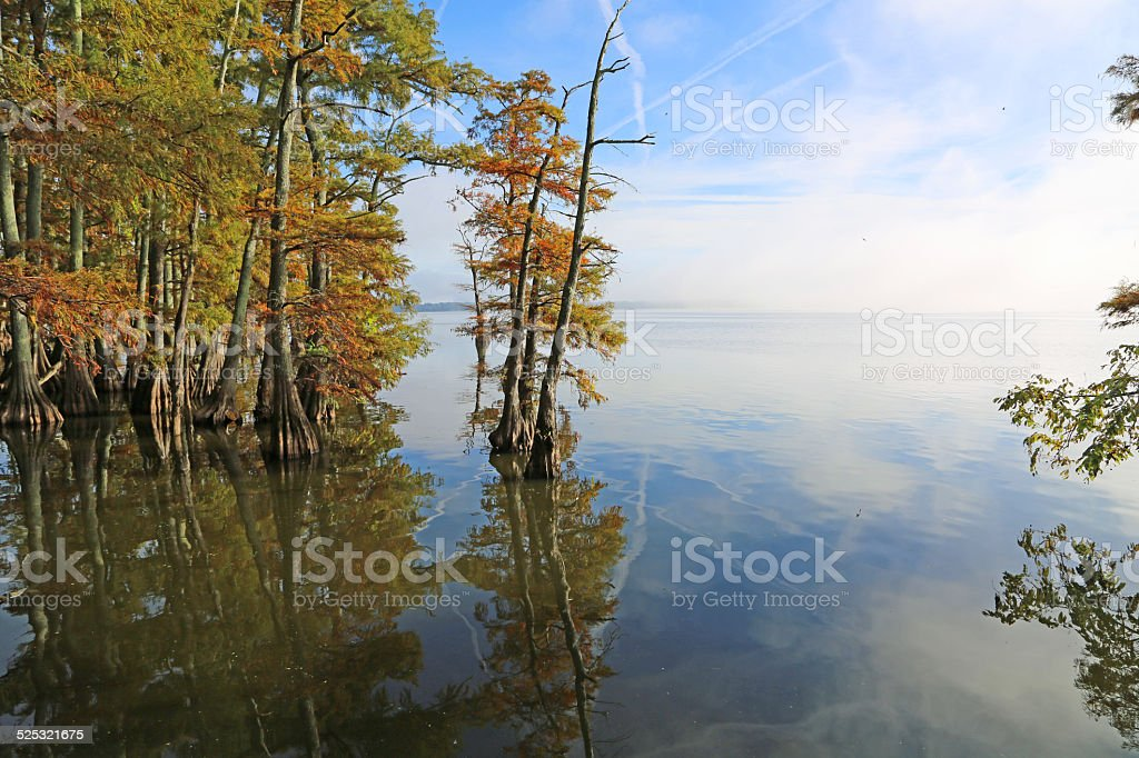 Cypress trees on Reelfoot Lake stock photo