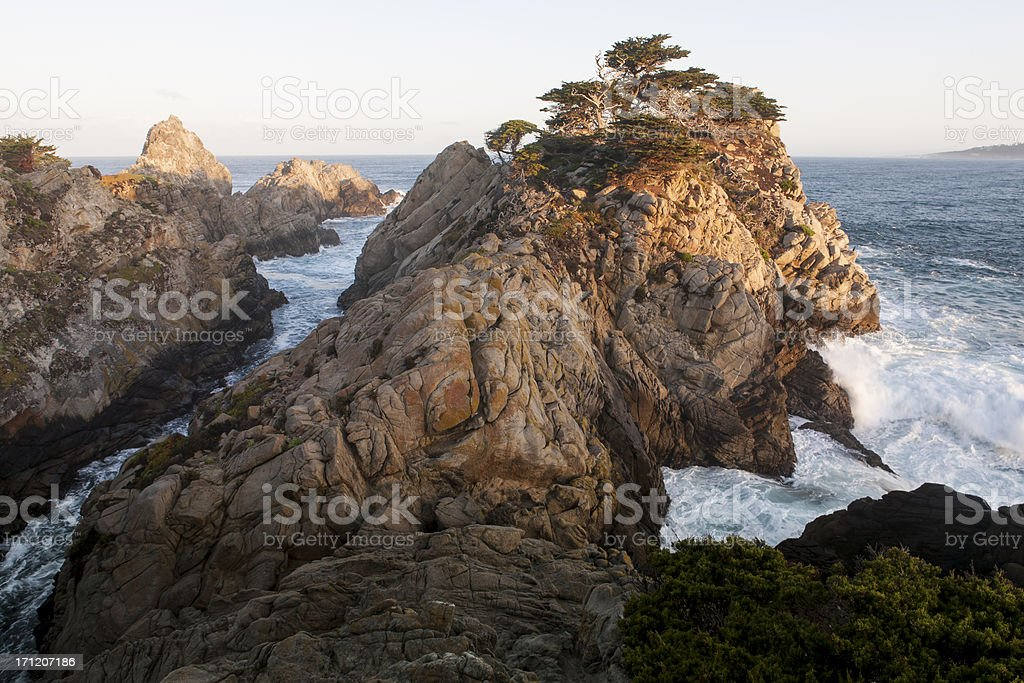 Cypress Trees on Rugged Coast stock photo