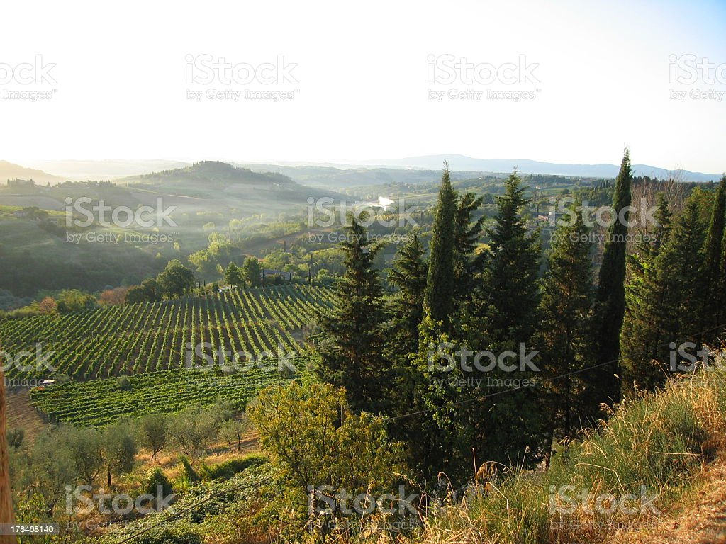 Cypress Trees Overlook a Tuscan Sunrise royalty-free stock photo