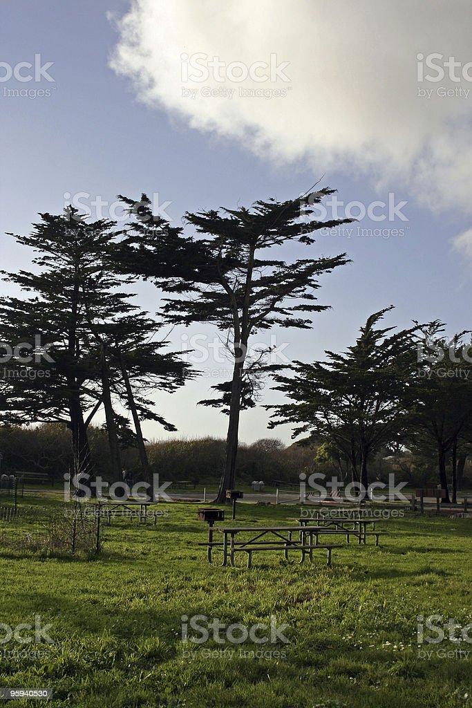 Cyprès photo libre de droits
