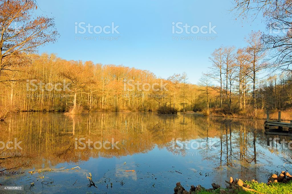 Cypress Trees Reflecting In Pond In Spring stock photo