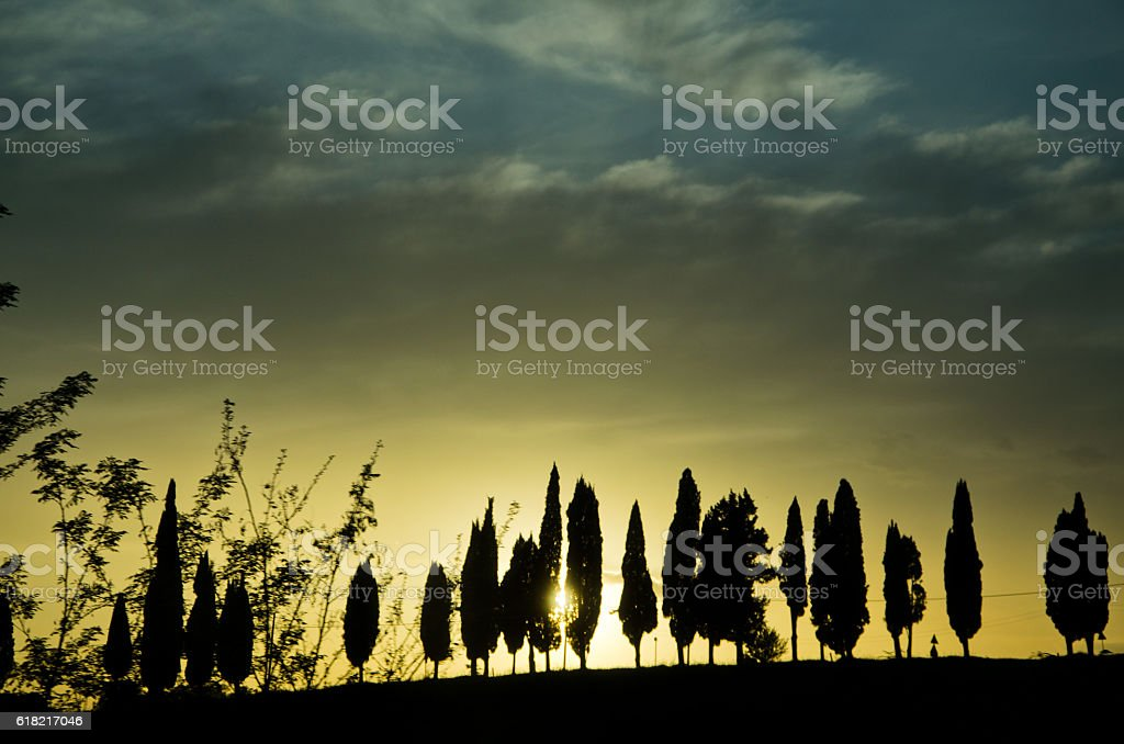 cypress trees silhouette in a Tuscan sunset stock photo