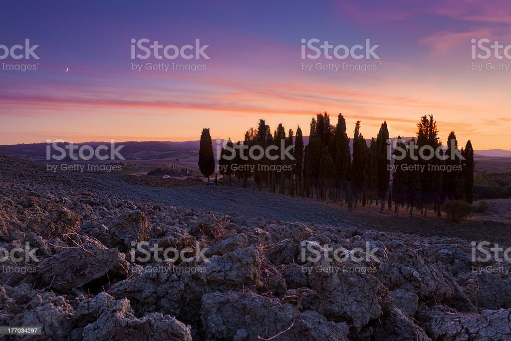 Cypress Trees Tuscany royalty-free stock photo