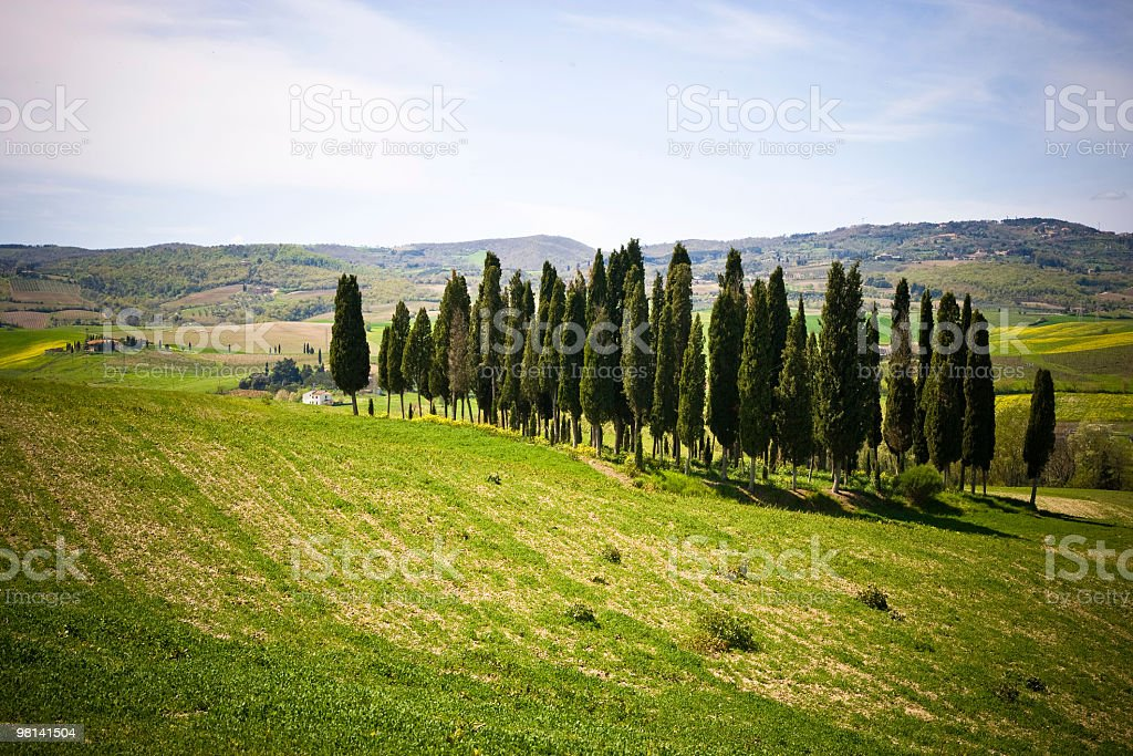Cypresses and hills stock photo