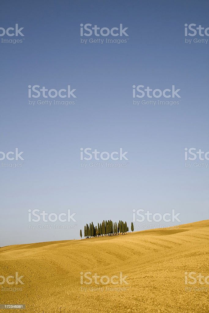 Cypresses in a plowed hill - slope horizon line royalty-free stock photo