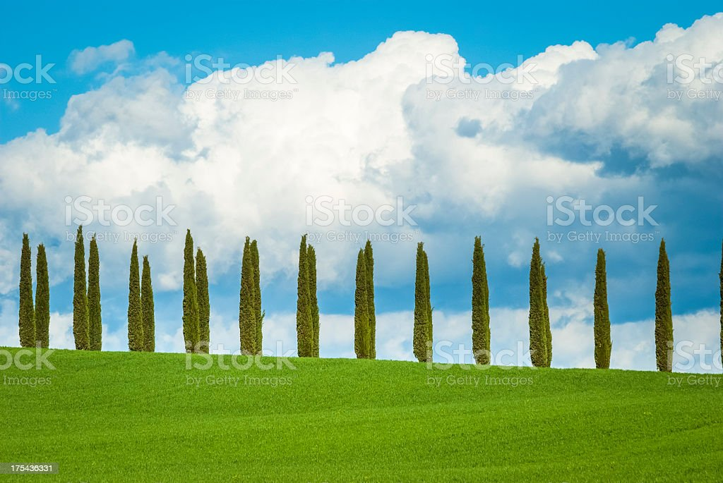 Cypresses in a row, Val D'Orcia royalty-free stock photo