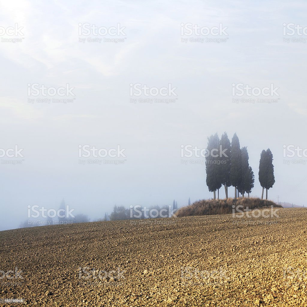 Cypresses in Tuscany stock photo