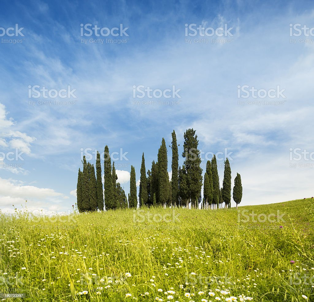 Cypresses, meadow and skyscape in Val d'Orcia, Tuscany Italy royalty-free stock photo