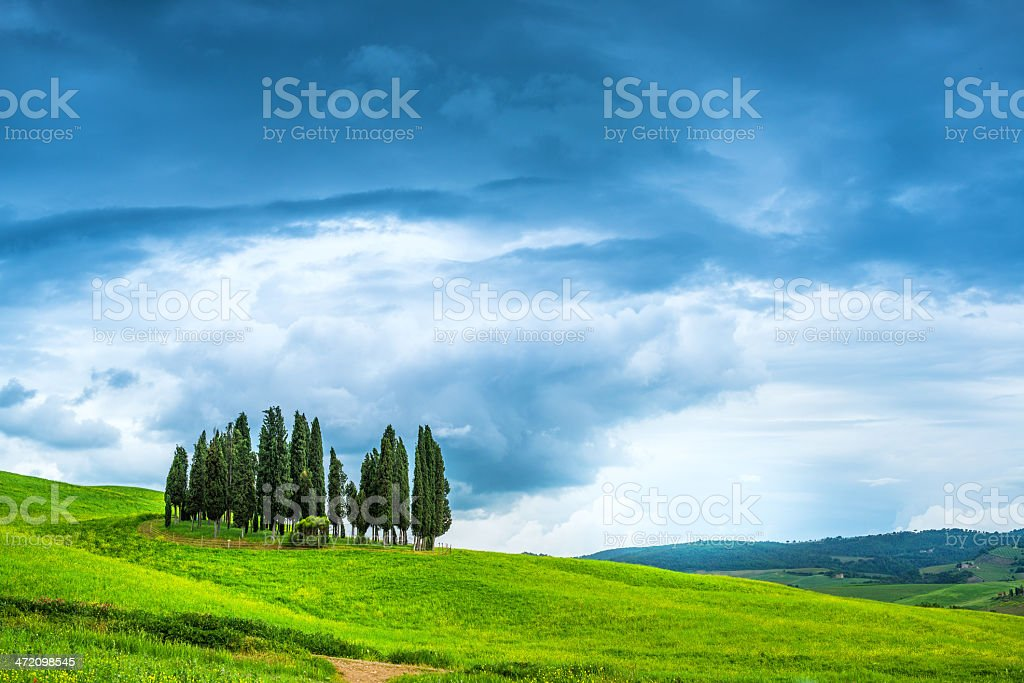 Cypresses uder stormy sky royalty-free stock photo