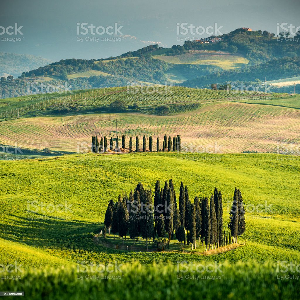 Cypresses uder stormy sky stock photo