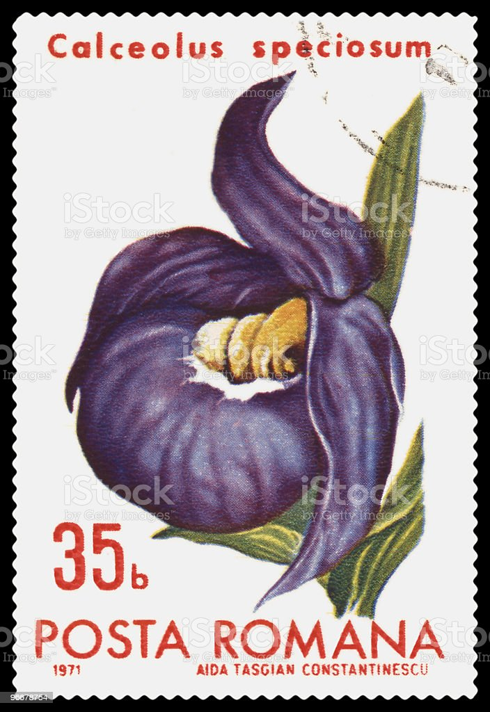 Cypripedium postage stamp stock photo