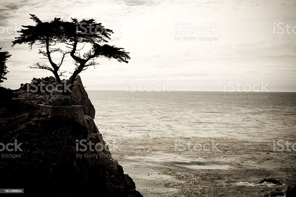 Cyprus Tree royalty-free stock photo