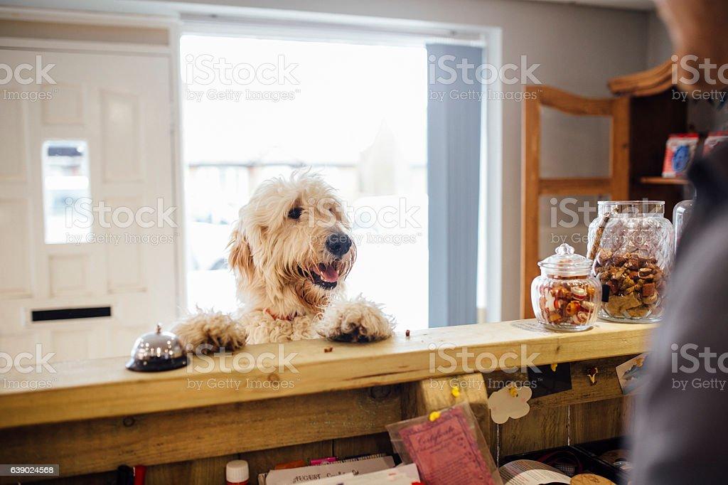 I'd Like A Trim Please stock photo
