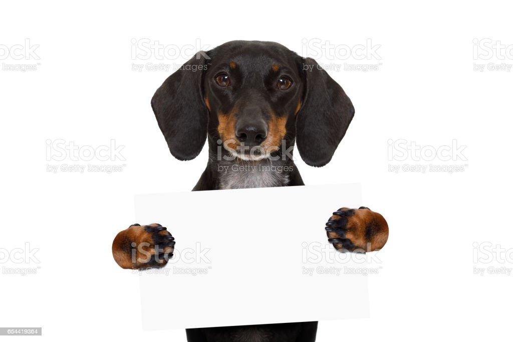 dachshund sausage dog banner stock photo
