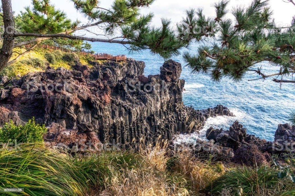 daepo jusangjeolli cliff pine tree stock photo