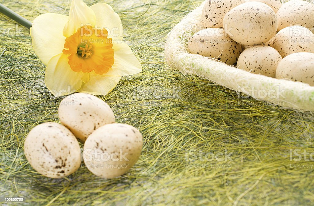 Daffodil and basket with easter eggs royalty-free stock photo