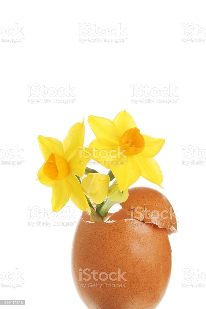 Daffodil and egg stock photo