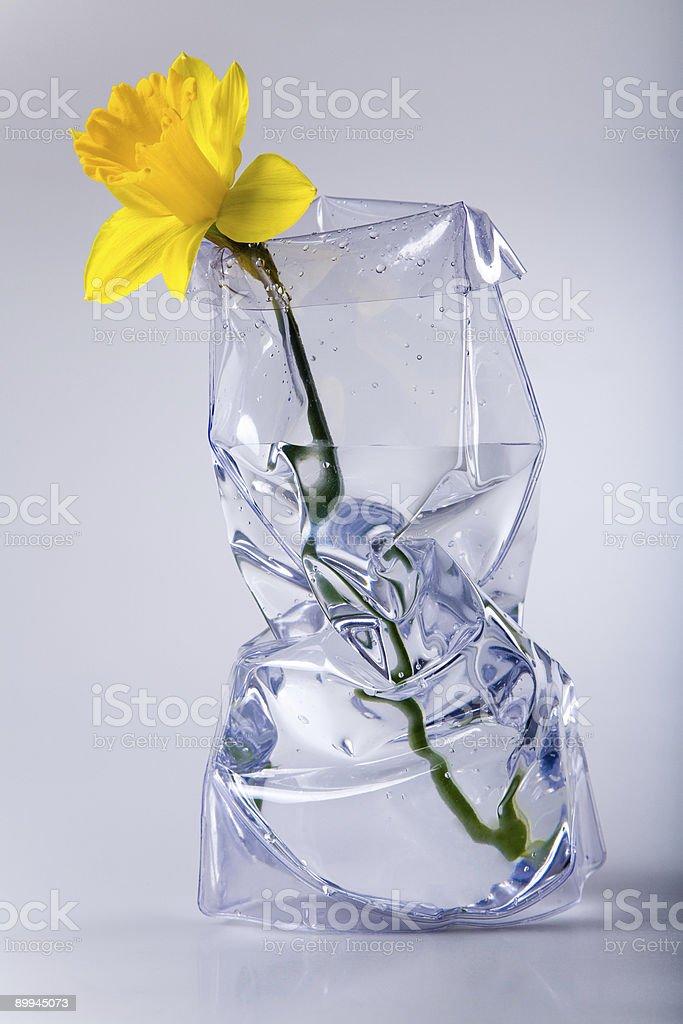 Daffodil in vase. stock photo