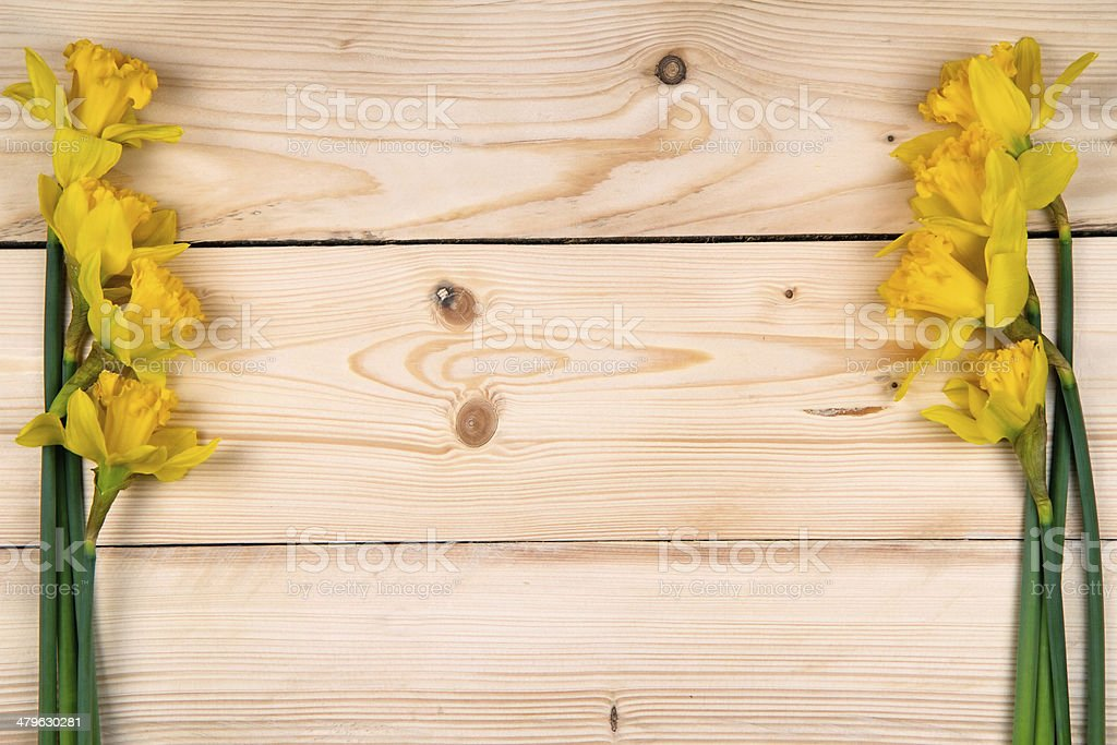 Daffodils a popular symbol of the spring season stock photo