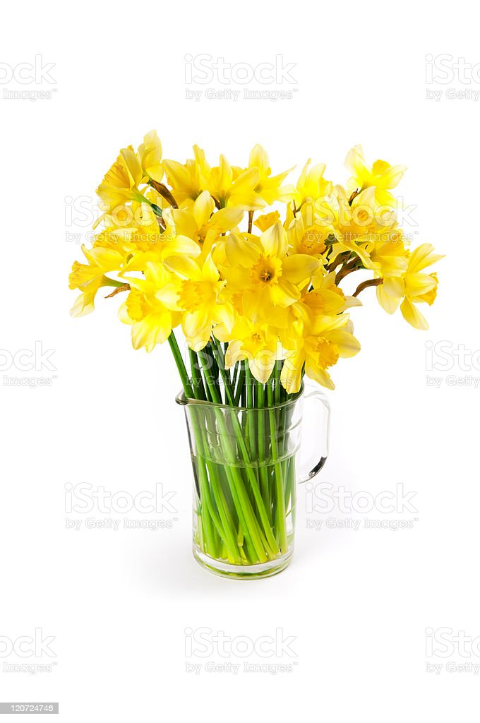 Daffodils bouquet royalty-free stock photo