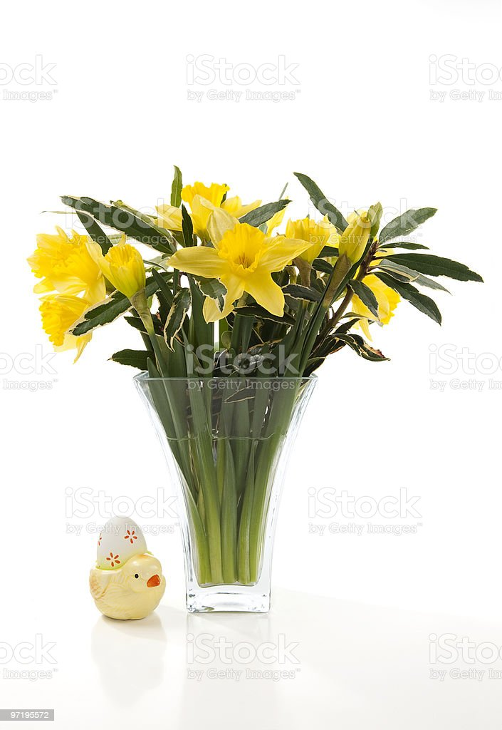 Daffodils in vase royalty-free stock photo