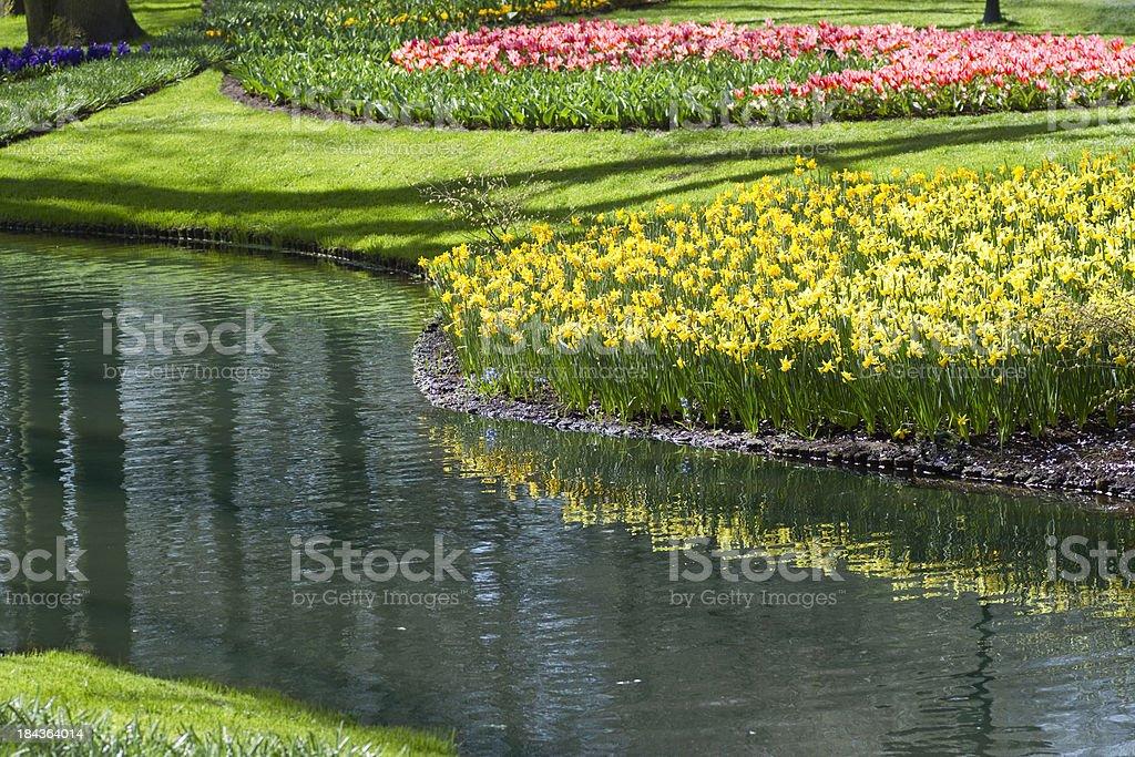 Daffodils near a pond royalty-free stock photo