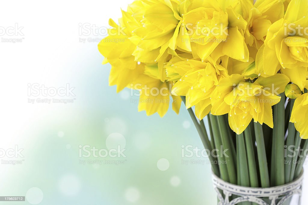 Narcisos foto royalty-free