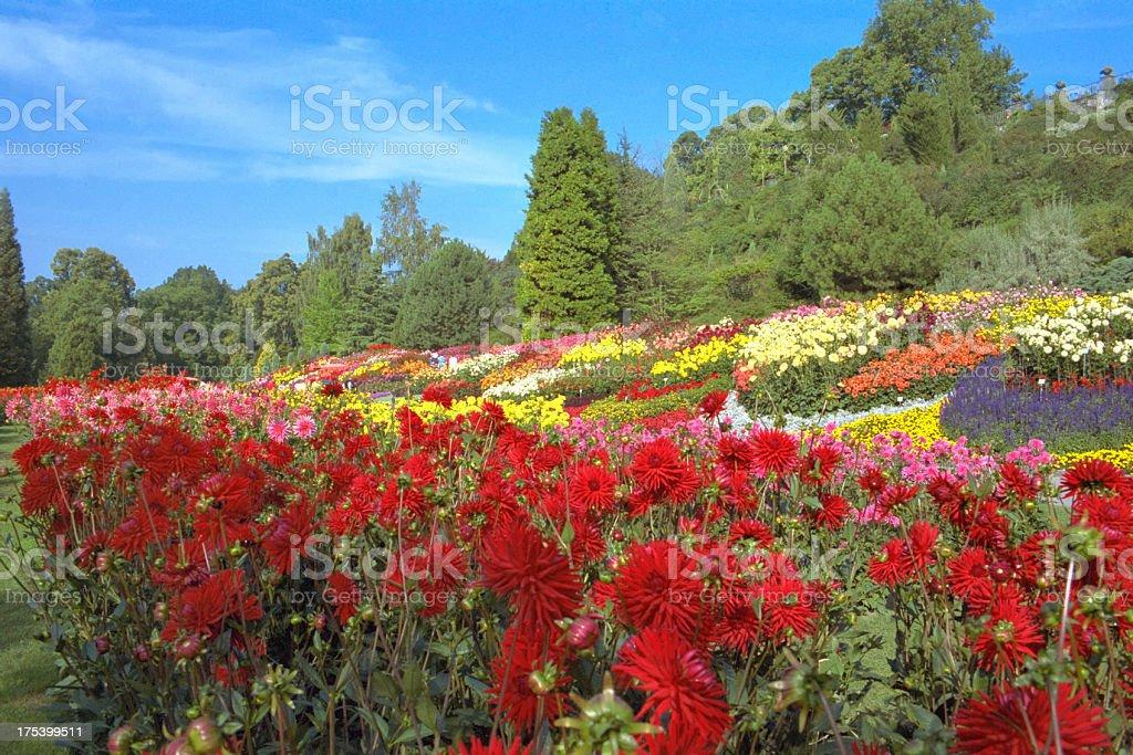 dahlia garden at island Mainau stock photo