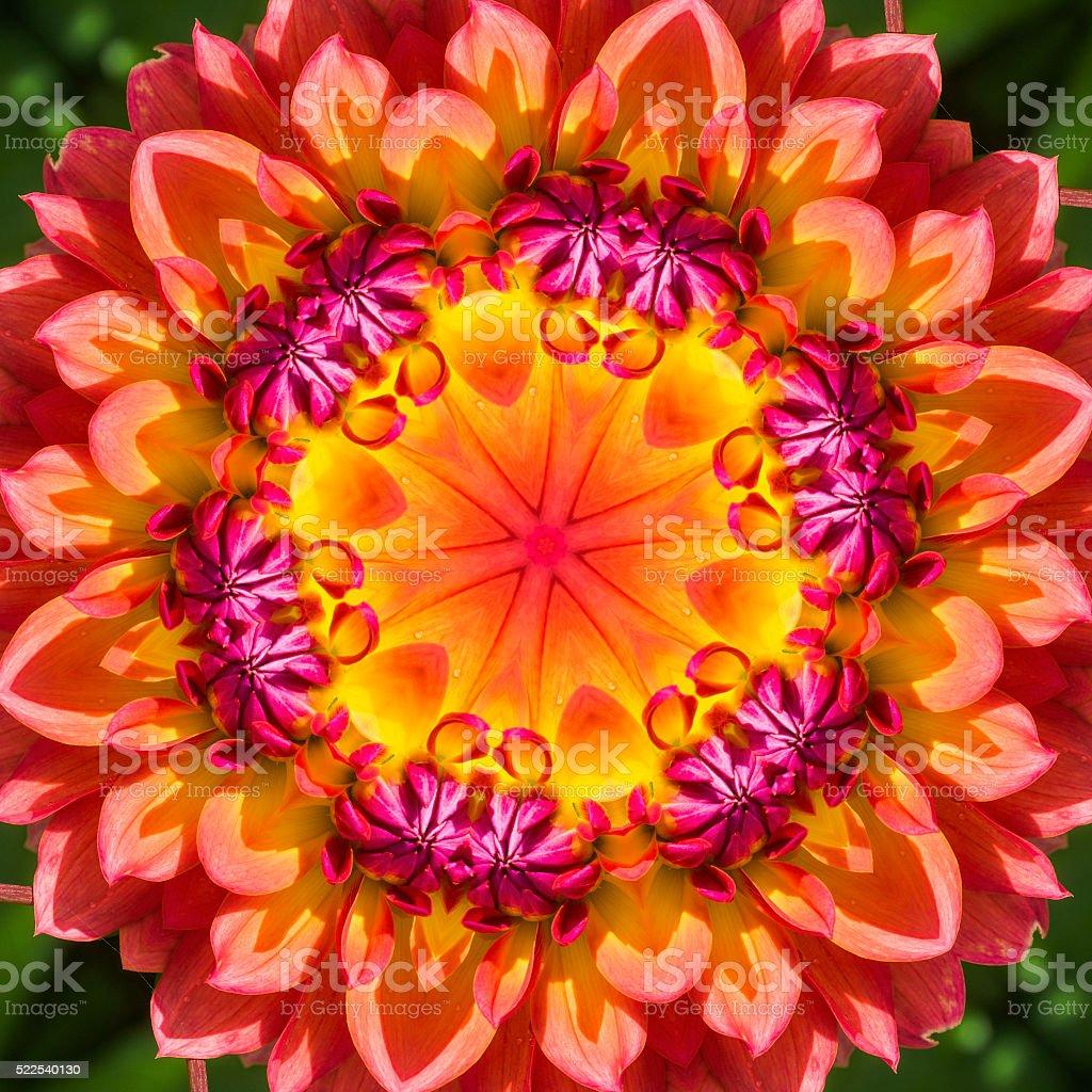 Dahlia Mandala stock photo