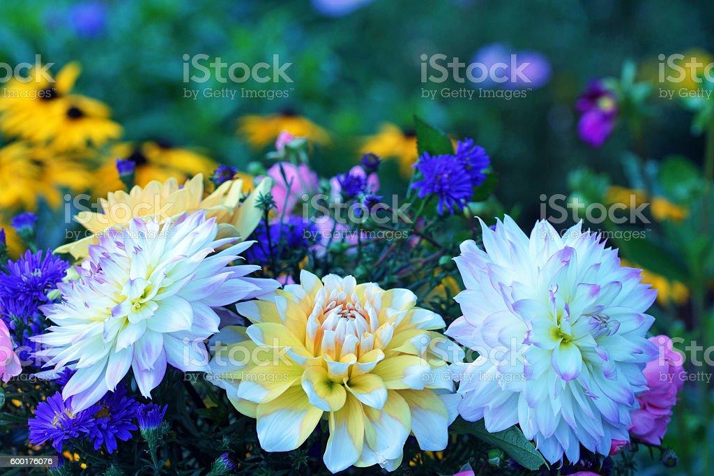 Dahlias and echinacea stock photo