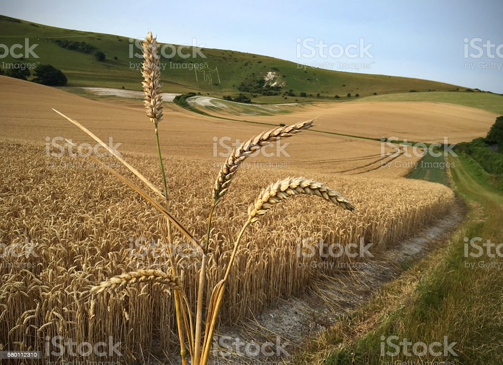 Daily Bread stock photo