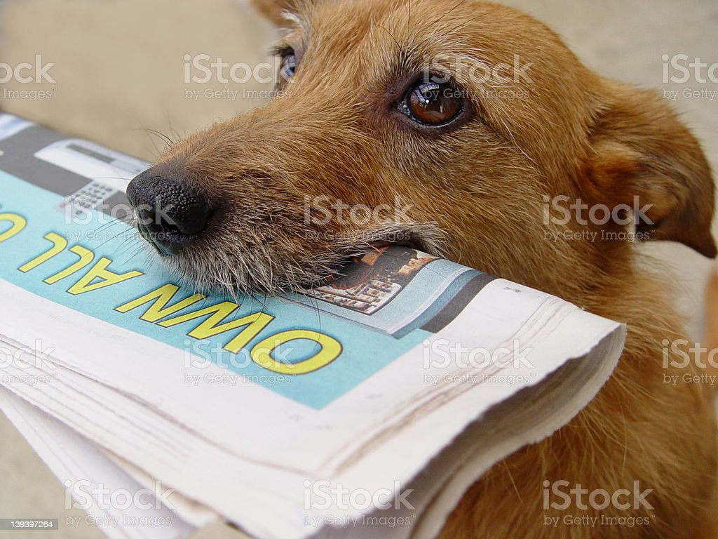 Daily news, dog with newspaper royalty-free stock photo