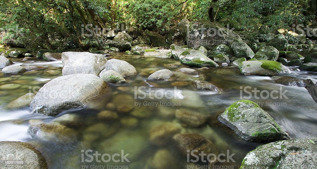 Daintree National Park stock photo