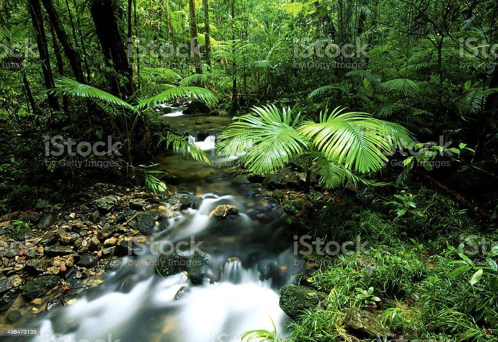 Daintree Rainforest, Australia stock photo