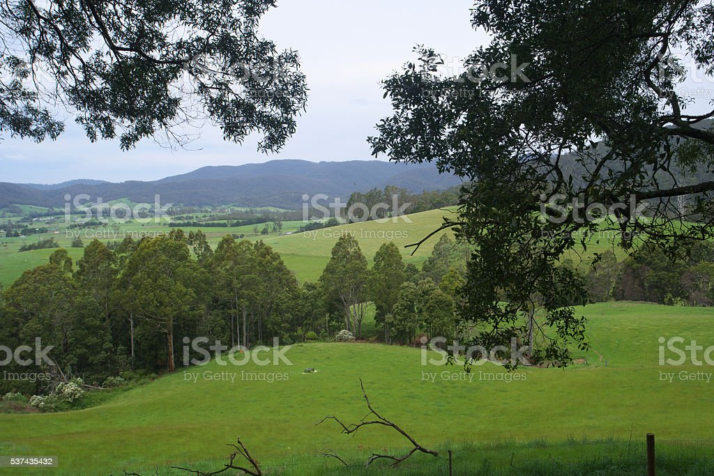 dairy country pyengana tasmania stock photo