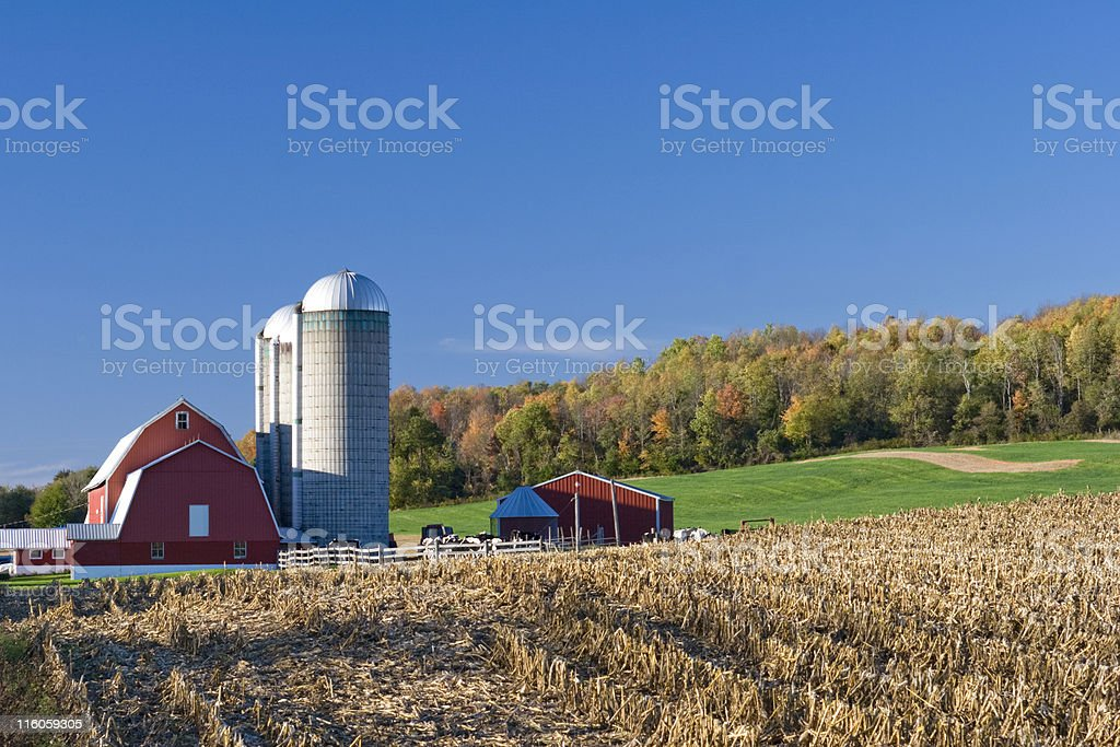 Dairy farm and field with red barn in autumn royalty-free stock photo