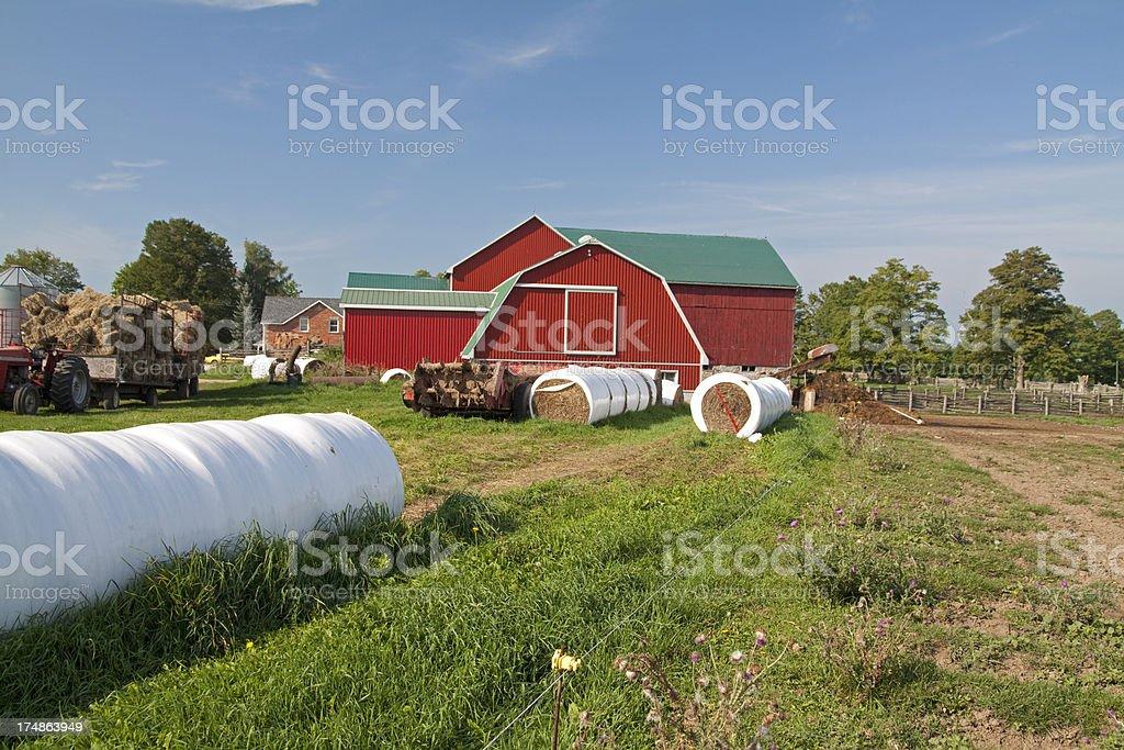 Dairy Farm royalty-free stock photo