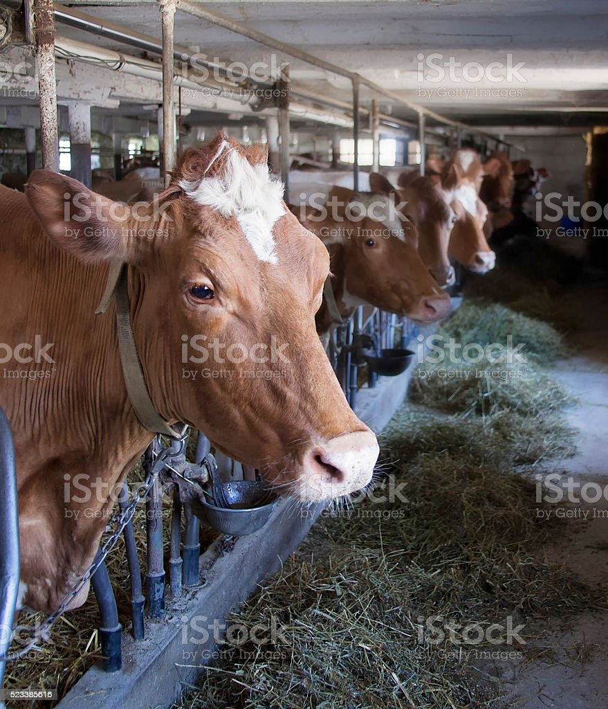 Dairy farm stock photo
