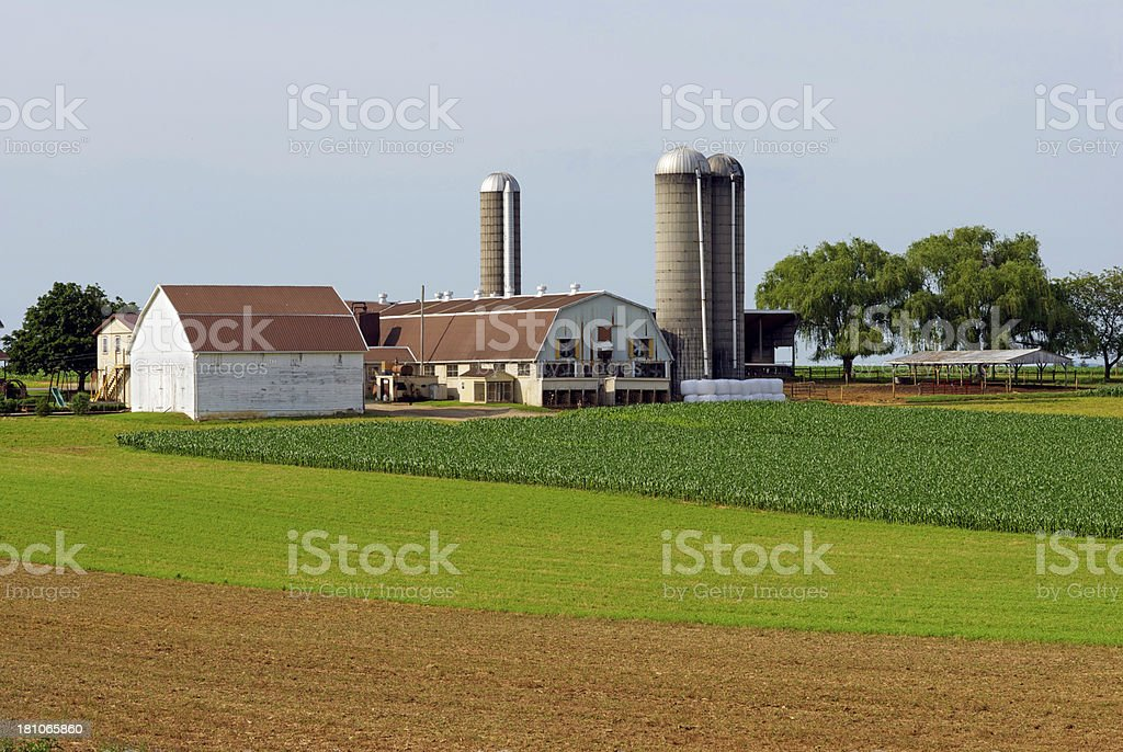 Dairy Farm with Silos in Summer royalty-free stock photo