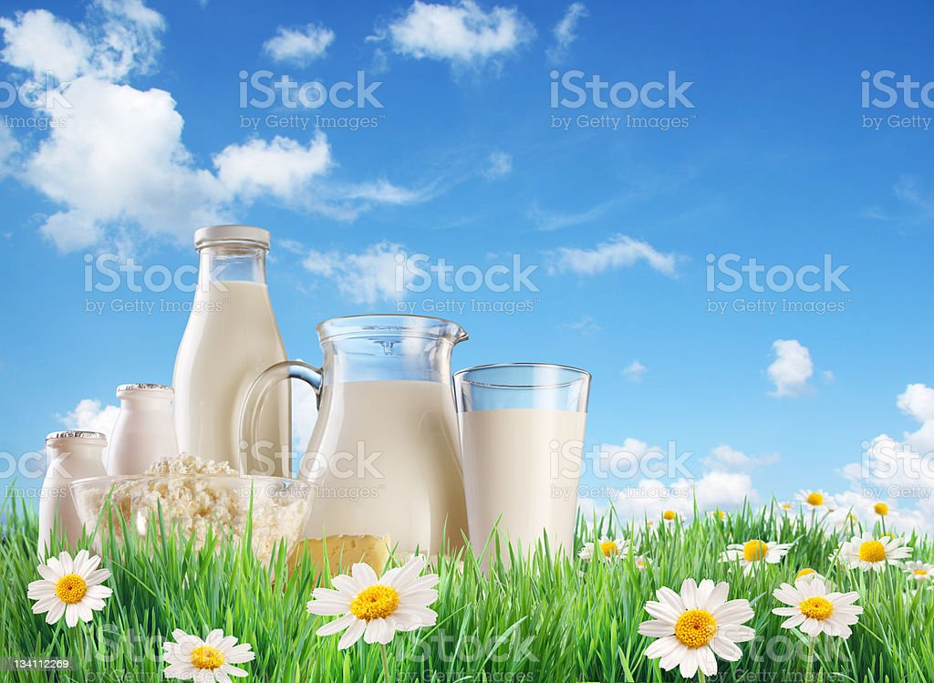 Dairy produce on the grass with chamomiles. royalty-free stock photo