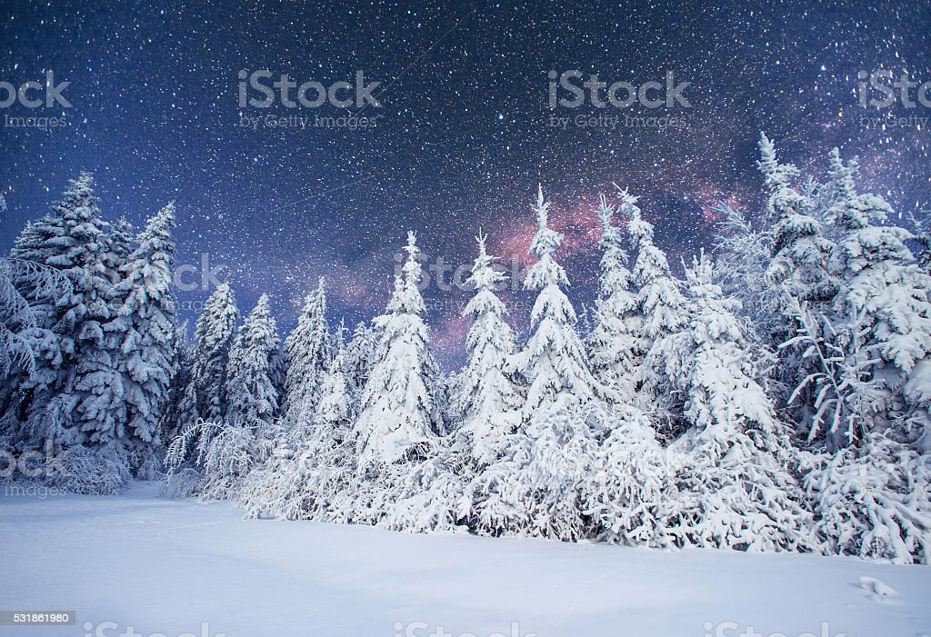 Dairy Star Trek in the winter woods. Carpathians, Ukraine, Europe stock photo