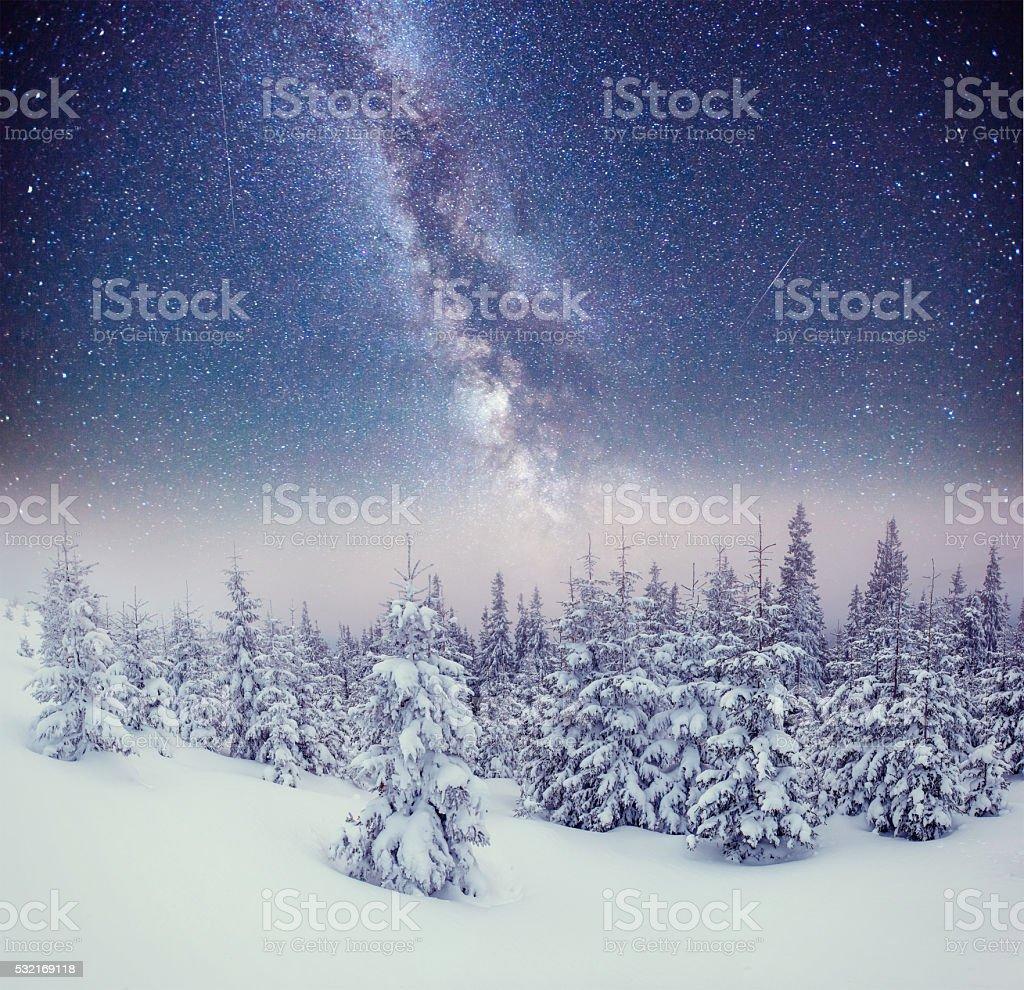 Dairy Star Trek in the winter woods. Carpathians, Ukraine, Europe. stock photo