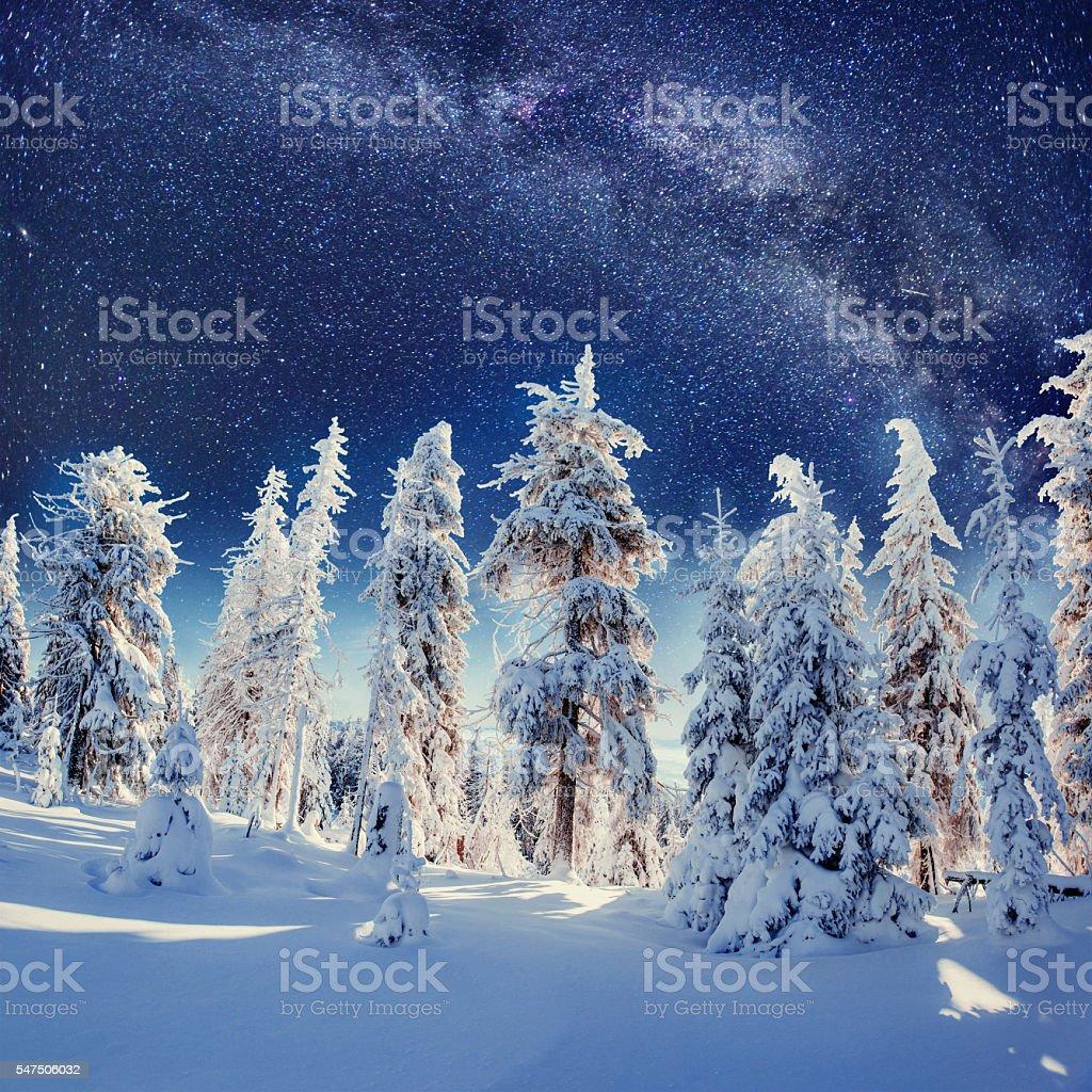 Dairy Star Trek in the winter woods. Carpathians, Ukraine, stock photo