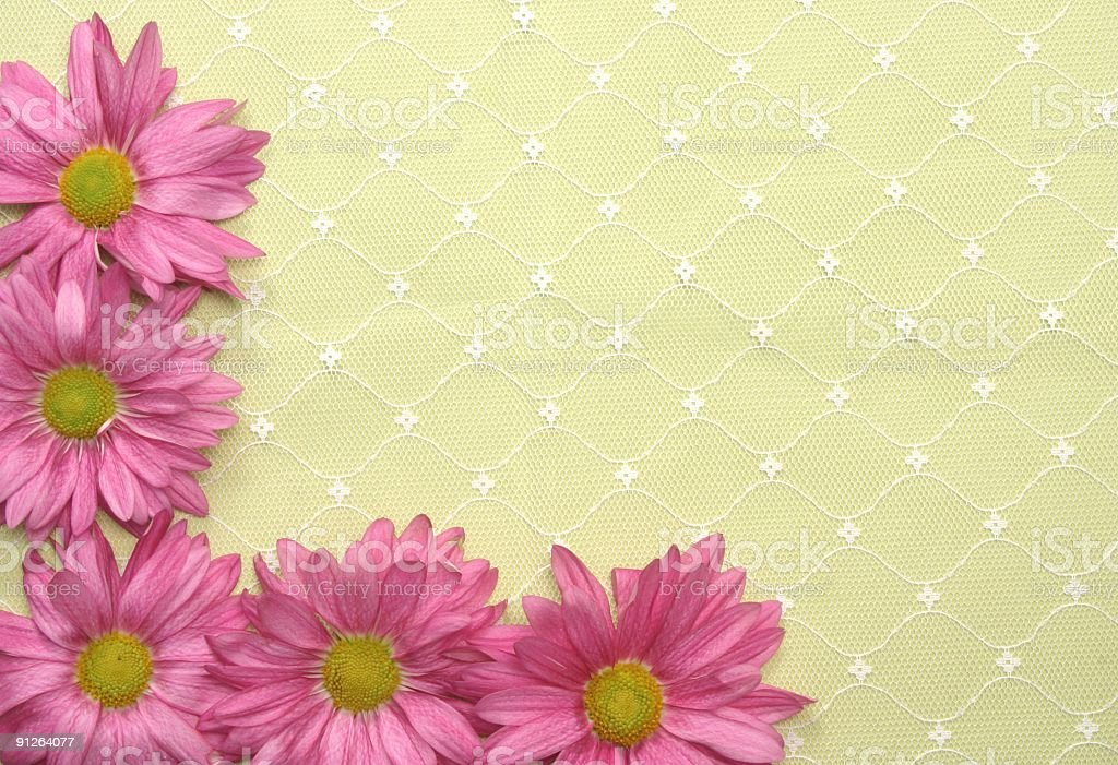 Daisies and Lace stock photo