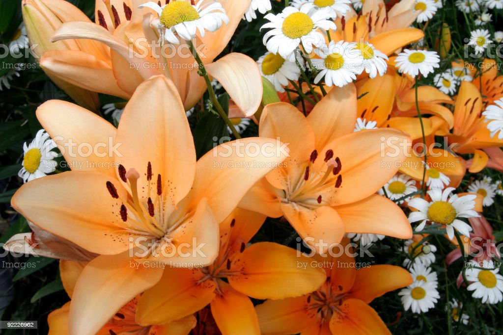 Daisies and Lilies stock photo