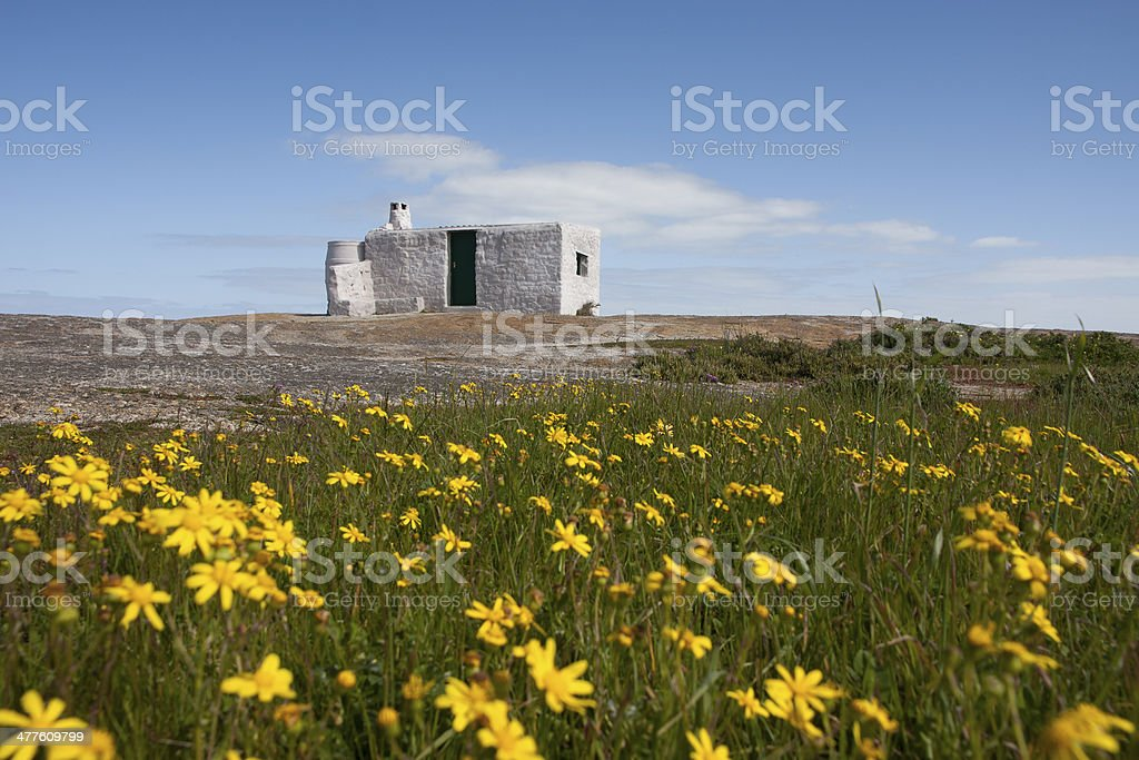 Daisies and old hut in Westcoast National Park Langebaan royalty-free stock photo