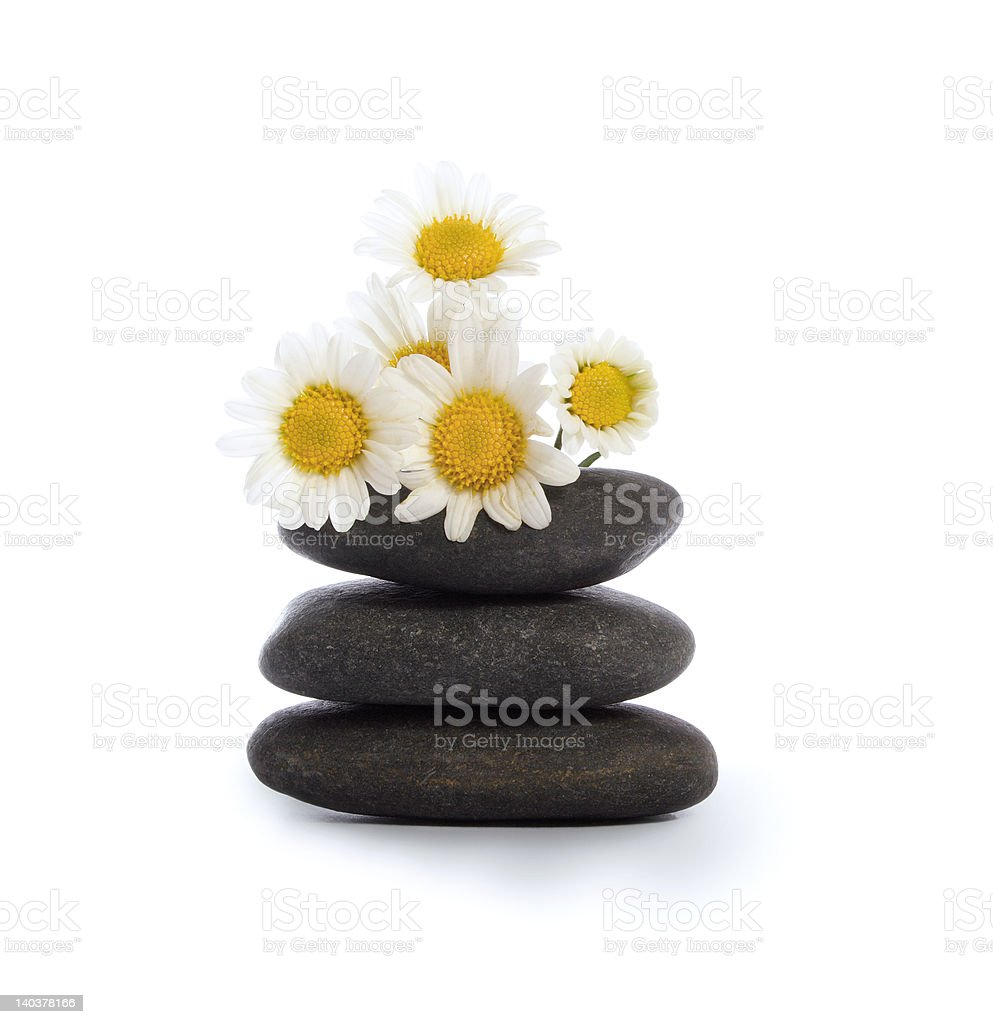 Daisies and river stones royalty-free stock photo