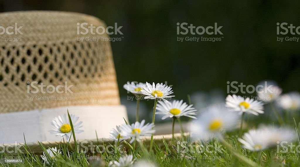 Daisies and straw hat royalty-free stock photo
