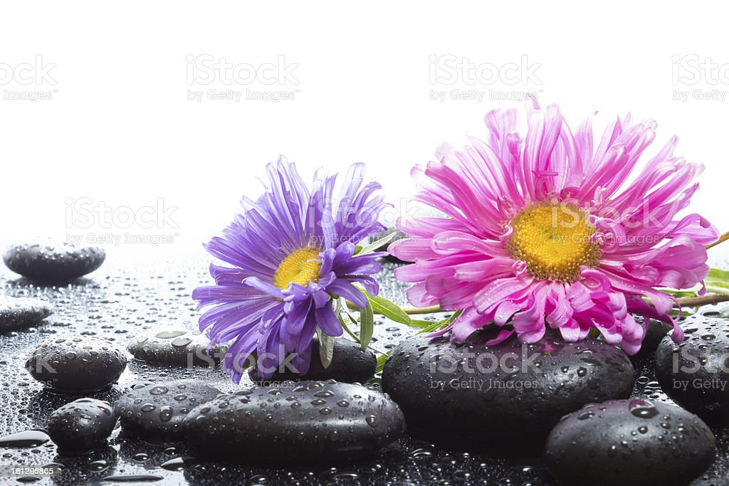 daisies and wet black stones royalty-free stock photo